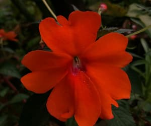 flower, red, and spring image