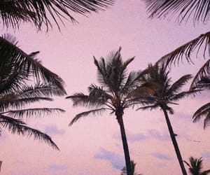 beach, coconut trees, and filter image