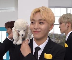 dino, DK, and wonwoo image