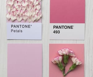 pink, flowers, and pantone image