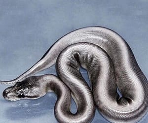 silver and snake image