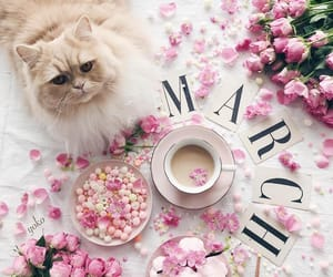 cat, coffee, and photography image