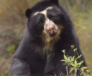 animals, bear, and wild image