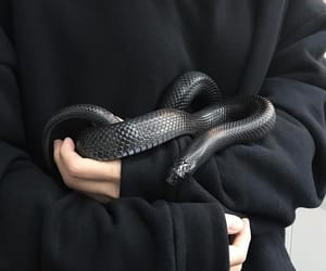 black and snake image