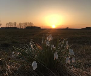 flowers, sun, and sweden image
