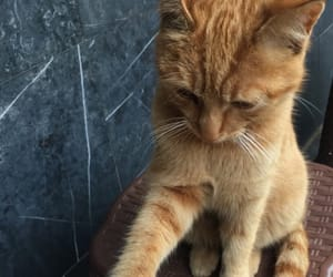 ginger, kitty, and fluffy friend image