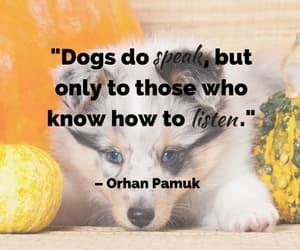 dogs are love, fight for animal rights, and dogs are family image