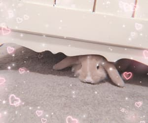 bunny, mini lop, and soft image