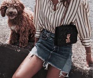 animal, dog, and summer image