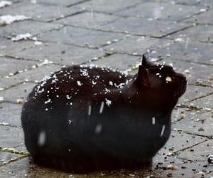 animal, black, and cat image