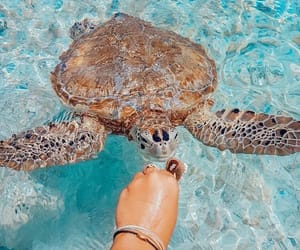 summer, turtle, and beach image