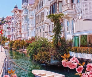 flowers, istanbul, and travel image