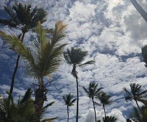 palm, palm tree, and south image