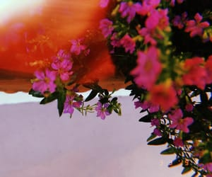bloom, flower, and pink image