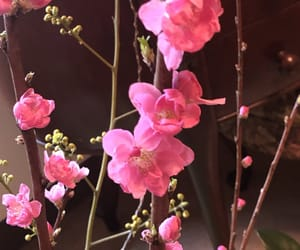 flowers, hotpink, and pink image