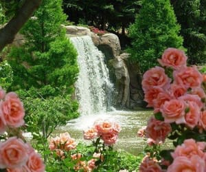 flowers, rose, and waterfall image