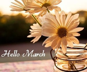 daisy, march, and spring image