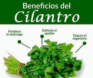 cilantro, food, and comida image
