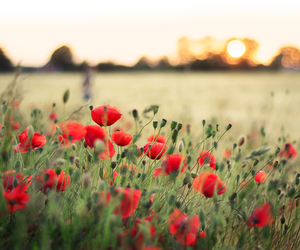 flowers, red, and sweden image