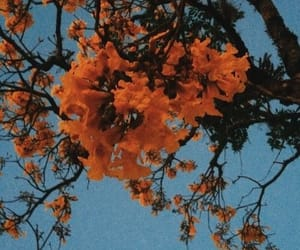 orange, blue, and flowers image
