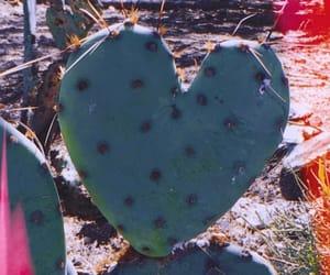 aesthetic, arizona, and cactus image