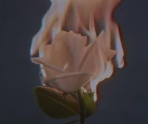 fire, flower, and rose image