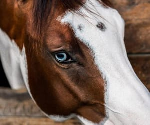 horse, horseriding, and horses image