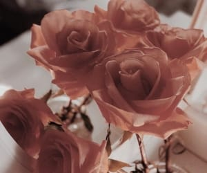 flowers, pale, and roses image