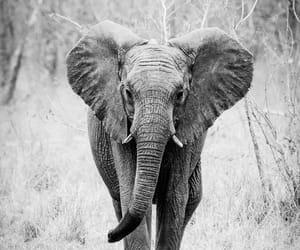 animal, elephant, and beautiful image