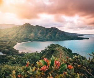 aesthetic, beauty, and hawaii image
