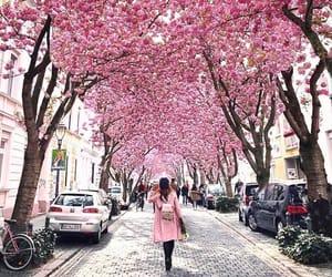 city, pink, and bonn image