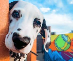 dog, animals, and beautiful image