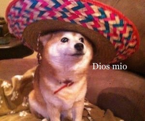 dog, sombrero, and funny image