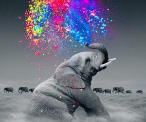 art, elephant, and colors image