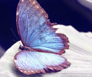 beautiful, dreamy, and blue butterfly image