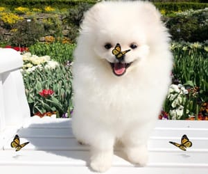 butterfly, dog, and sweet image
