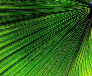 frond, green, and leaf image