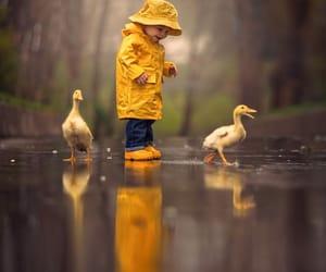 rain, duck, and yellow image