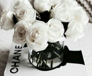 chanel, lifestyle, and photography image
