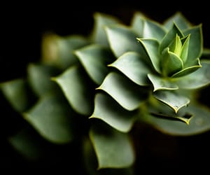 aloe, are, and cactus image