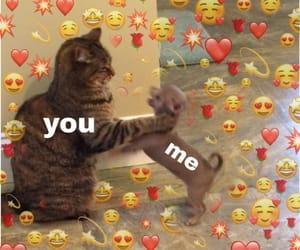 cat, choke, and couple image