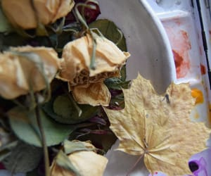 art, dried flowers, and vintage image