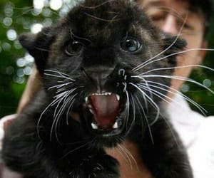 black, cute, and panther image