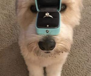 animal, cutie, and dog image