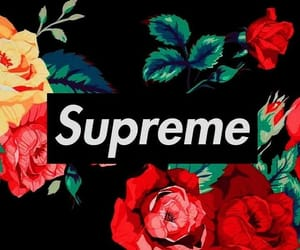 supreme, rose, and wallpaper image