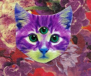 aesthetic, cat, and fabric image