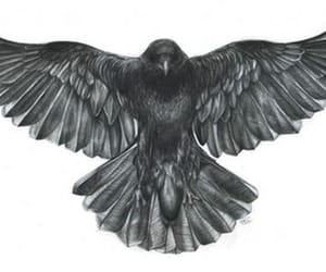 bird, raven, and Tattoos image