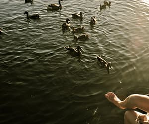 indie alternative, escape swans lake, and animals nature beautiful image