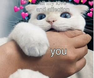 meme, reaction, and cute image