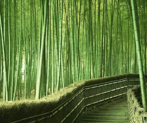 bamboo, japan, and nature image